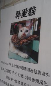 The most fashionable lost cat poster image I have ever seen...