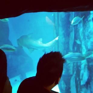 Snuck into the London Eye Aquarium, went in backwards through the giftshop saving £23.50. #BadBoysForLife 偷偷溜進倫敦眼的水族館看魚免錢, 省了我23.5英鎊